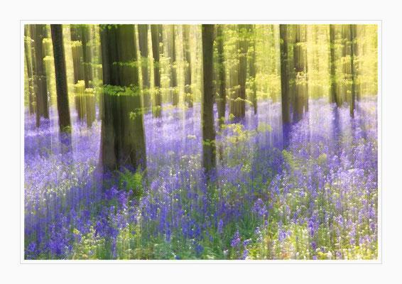 Lichtwischerei im blauen Wald