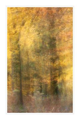 Leuchtender Herbstwald