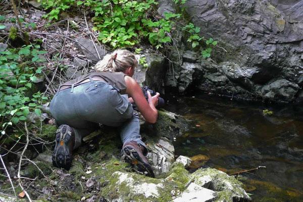 Auch hier finden sich Amphibien