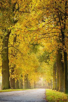 Herbstliche Eichenallee NRW