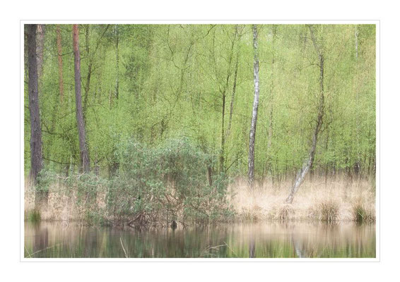 Frühling im Heidemoor