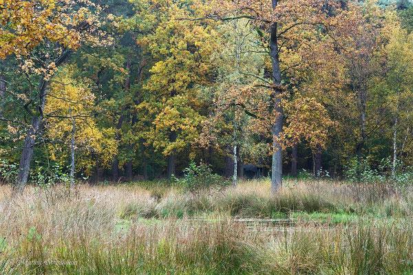 Heidemoor