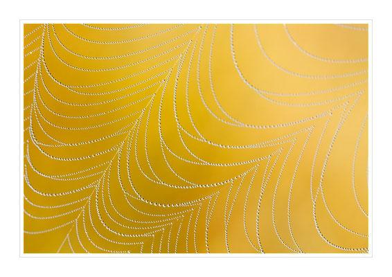 Spinnennetz im goldenen Licht
