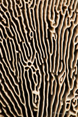 Detailaufnahme der Pilzstruktur