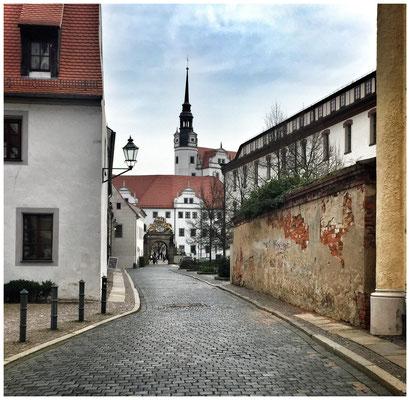 """Blick zum Schloß Hartenfels durch die """"Wintergrüne"""". Torgau, April 2016."""