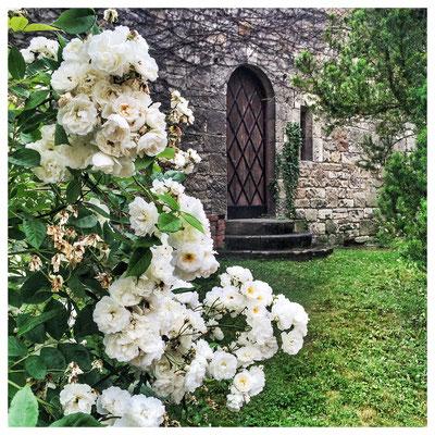 Garten Kloster Pforta. Juni 2016.
