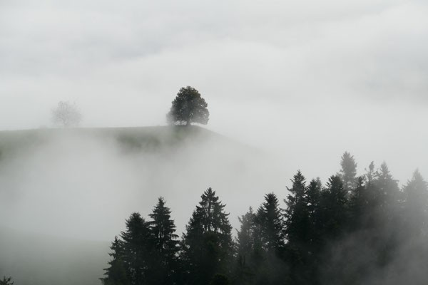 Nebelstimmung im Emmental.
