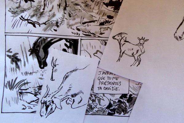 Réflexion faite, ou Comment changer des chevaux en chèvres / On second thought, or How to turn horses into goats