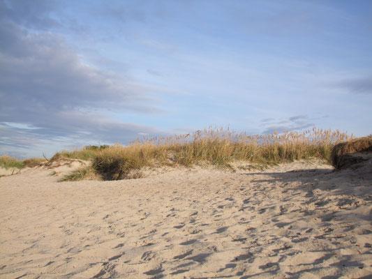 Ostseestrand bei Kühlungsborn