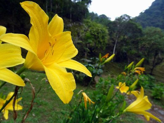 Die üppige Flora rund um Termales