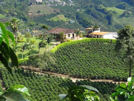 Kaffeefinca inmitten der Zona Cafetera