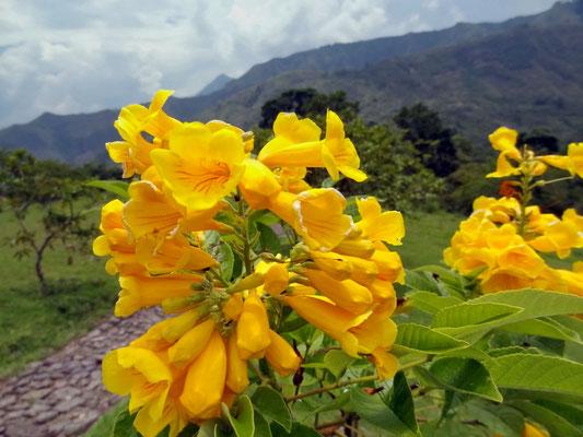 Berglandschaft im Tierradentro