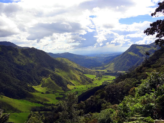 Blick ins Cocora Tal
