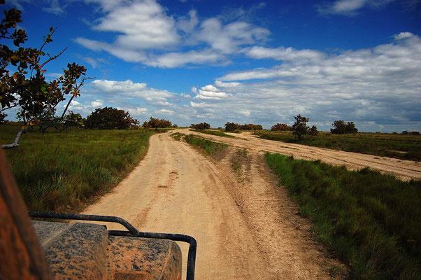 Unterwegs im Llanos