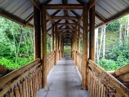 Urige Bambusbrücke auf dem Weg zur Ausgabungsstätte La Segovia