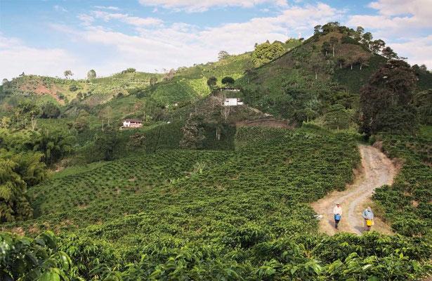 Kaffee- Kulturlandschaft