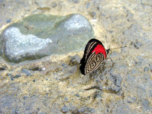"""Mit etwas Glück auch zu sehen - Schmetterling mit """"Startnummer 89"""""""