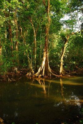 Dschungel bei Nuqui - Pazifikküste - Kolumbien