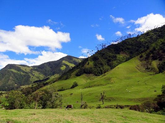 Im Valle del Cocora - foto by chapoleratours