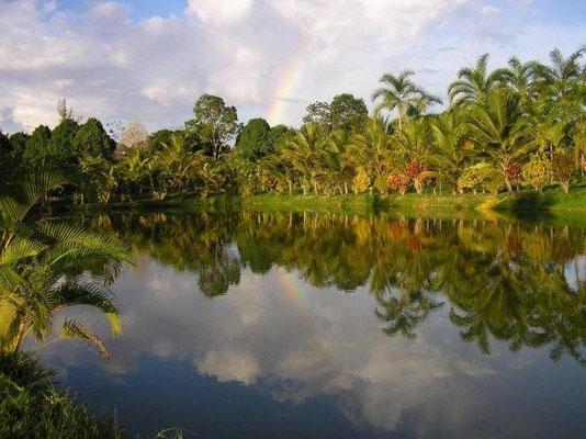 Ein Seitenarm des Rio Amazonas