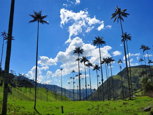 Valle de Cocora - Kolumbien