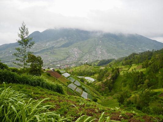 Reisefelder und Merapi