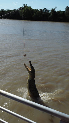 Alle Krokodile springen hoch