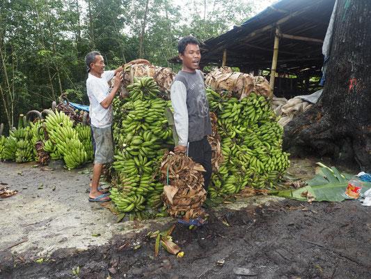 Bananen überall