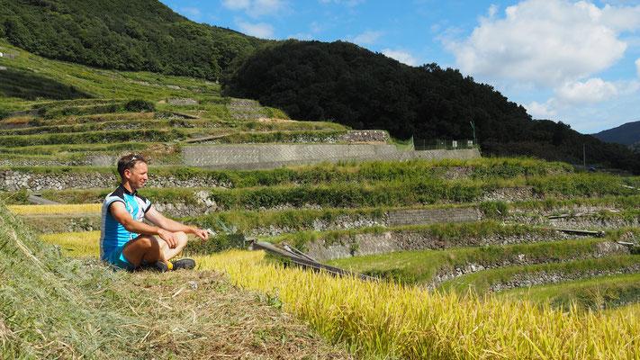 Reisfelder auf der Insel Shodoshimo