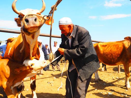 Kashgar Tiermarkt