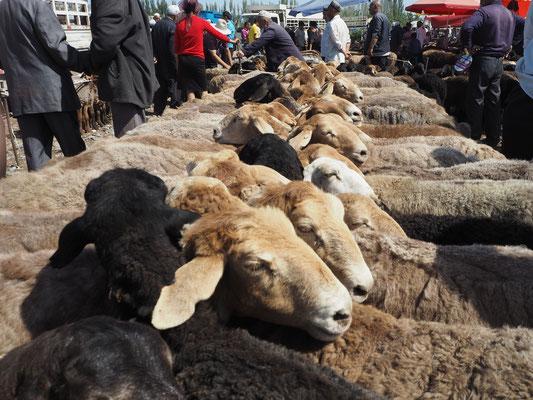 Schafe, Schafe