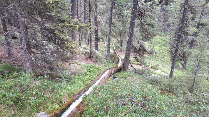 Waldbauernweg