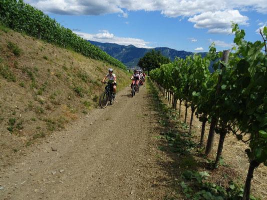 duch die Weingärten von Dolenje