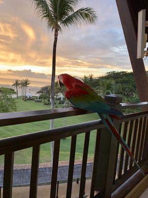 Papagei zu Besuch