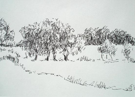 Bomen in de uiterwaarden van Oosterhout