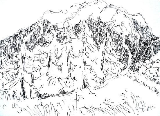 Groepje naaldbomen in de bergen