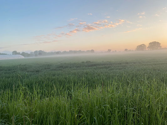 Mystische Stimmung über einer Wiese - verursacht durch ein zerlas Nebelband.