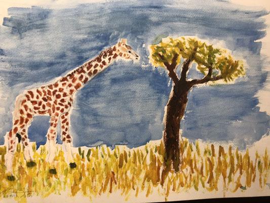 Giraffe, Afrika