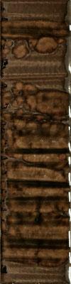 Aparici Joliet brown