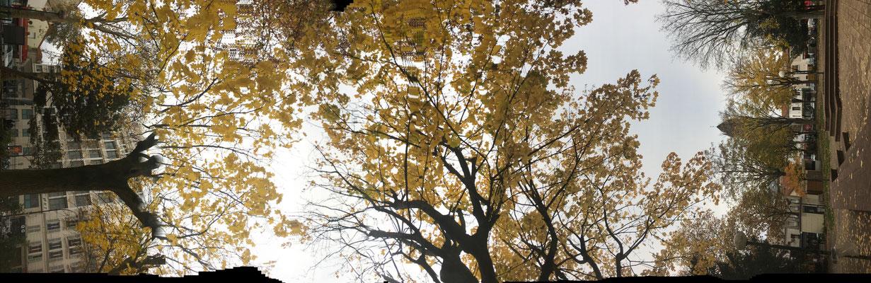 Pano Long arbre 3