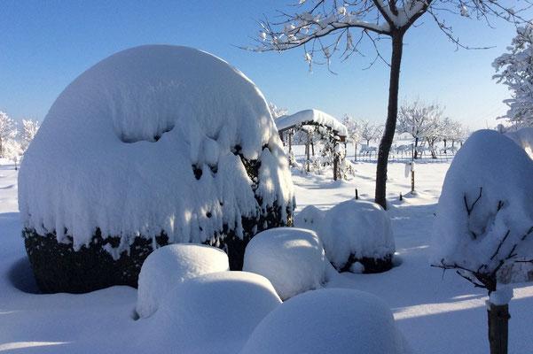 16.01.2021 Winterwunderland - winter wonderland