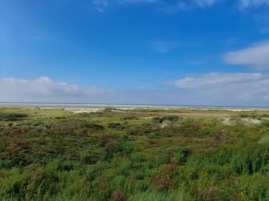 Dünenlandschaft Insel Borkum