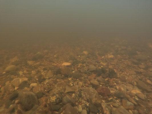 So sieht das Kiesbett aus Perspektive einer Forelle aus (Foto: A. Lampe).