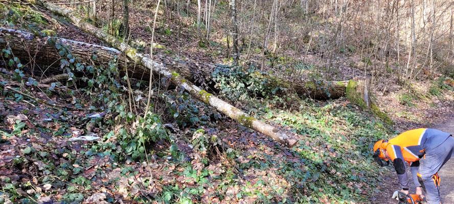 Baum stückeln