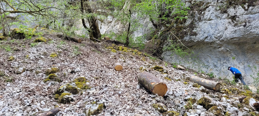 Eben, der Holzsegen. Der Forstwerkhof schmeisst 2 volle Ladungen Brennholz von der AH-Strasse über den Felsen runter