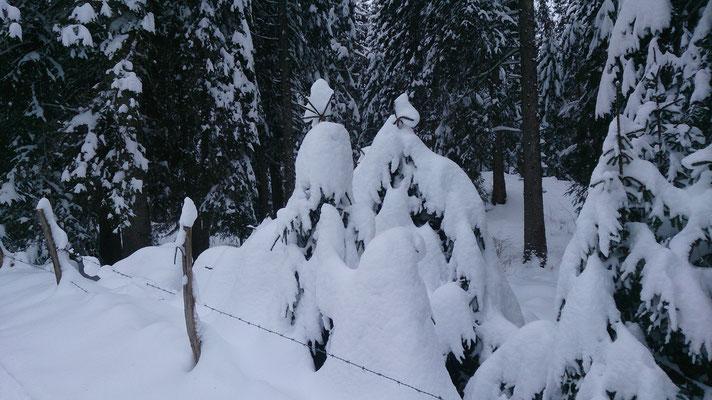 Arrivée tardive de la neige, mais une bonne grosse chute sauve la saison