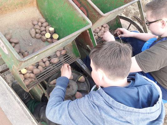 Die Jungs auf der alten Kartoffelpflanzmaschine. Danke für eure Hilfe!