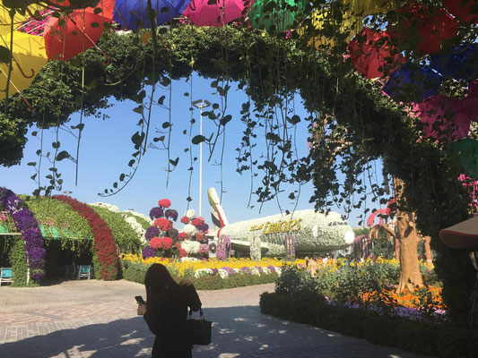 in Dubai's Miracle Garden