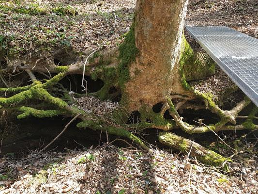 Baumwurzeln grün frei schwebend