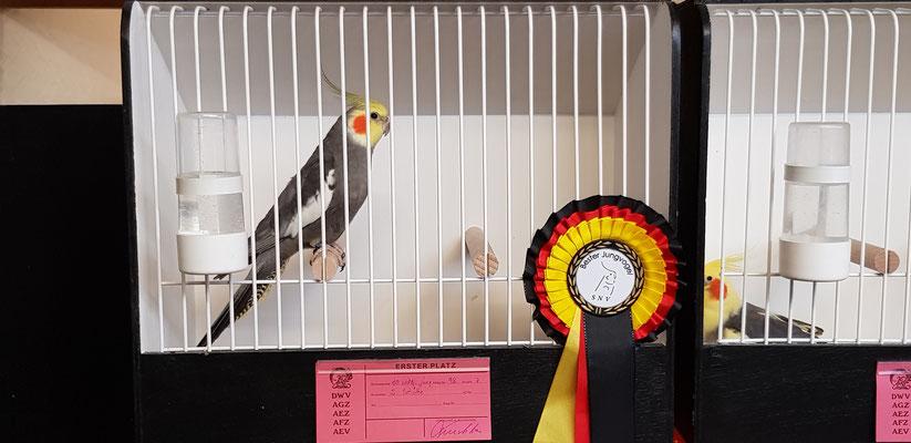 Bester Jungvogel & Bester Wildfarbiger Jung 1,0